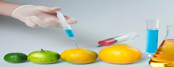 Applied Food Biotechnology